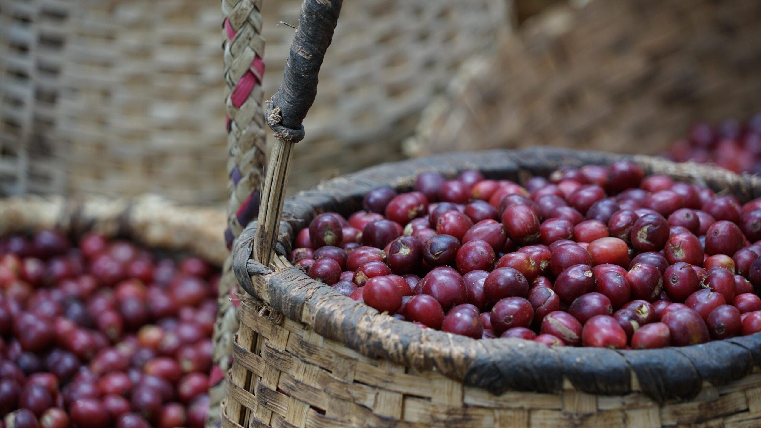 etiopia kawa, arabica etiopia, palarnia kawy ja-wa